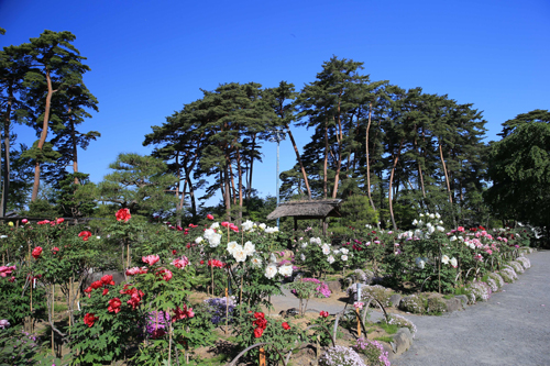 須賀川牡丹園(有料開園予定)
