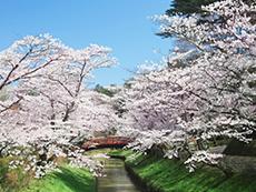 須賀川さくらまつり