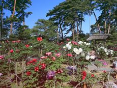 須賀川牡丹園開園式